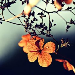 Upanat - Cosmétique Bio & Naturel